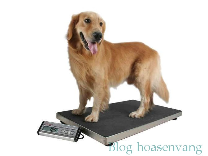dog-weighing-scales-mobile-hoasenvang