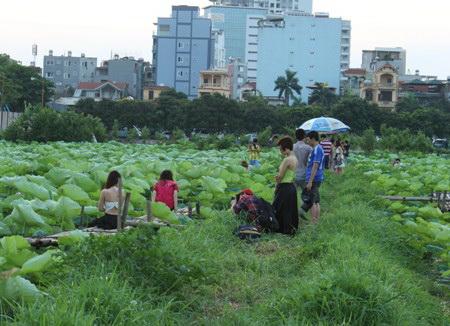 sen-ho-tay-ban-tre-ha-thanh-1-hoasenvang.com.vn