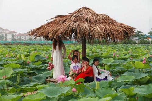 thieu-nu-va-mua-sen-no-het-11-9-hoasenvang.com.vn