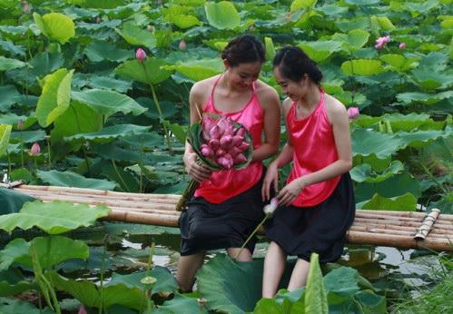 thieu-nu-va-mua-sen-no-het-12-10-hoasenvang.com.vn
