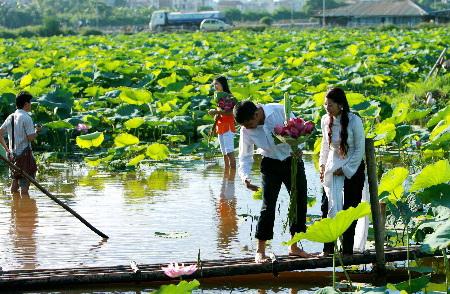 tinh-yeu-bat-dau-tu-ho-senkhac-dep-hoasenvang.com.vn