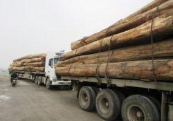 Phạt 190 triệu đồng với đoàn xe chở gỗ quá tải