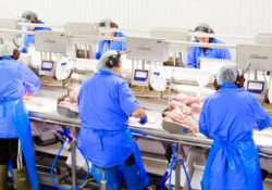 Marel's Precision Weighing & Grading at Seafood Processor Godthaab í Nöf