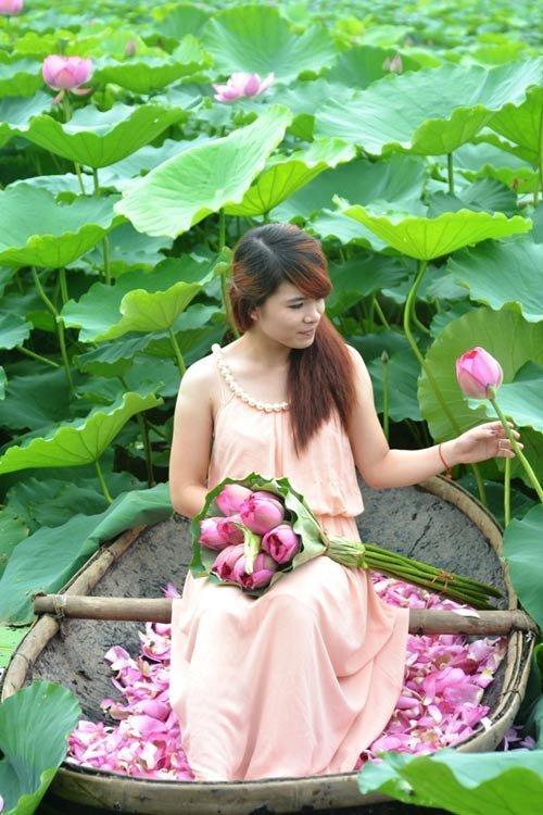 20-hoa-sen-hong-viet-nam-hoasenvang.vn
