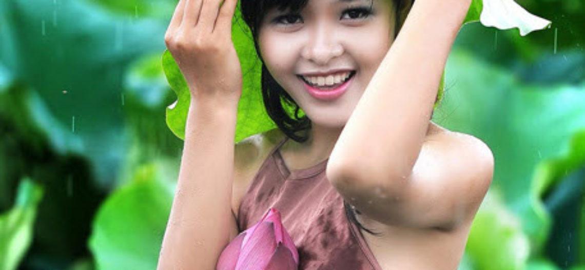 Mùa sen nở rộ – sắc hương trời Việt tỏa sáng