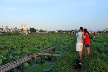 thieu-nu-va-mua-sen-no-het-da2552-hoasenvang.com.vn