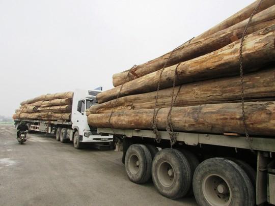 Các xe gỗ chở quá tải từ 20-51%.